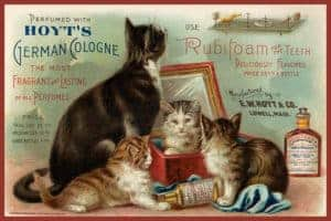 dental-poster-cats